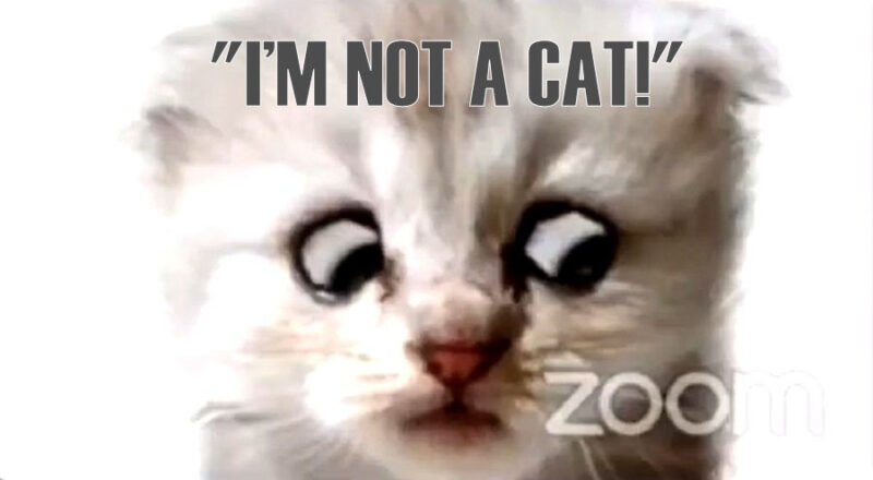 cat_lawyer